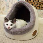 El Iglú cama para gatos Banbury & Co se puede colocar en cualquier lugar del hogar