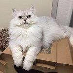 La caseta para gatos medianos Eco-friendly cumple múltiples funciones