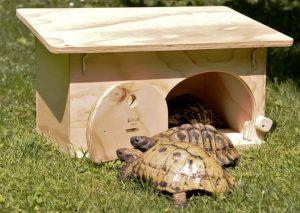 Caseta para tortugas Blitzen – Tamaño…