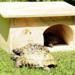 La caseta para tortugas Blitzen resguarda a tu mascota