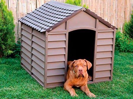caseta para caninos