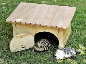 Casetas para Tortugas: Los Mejores Modelos