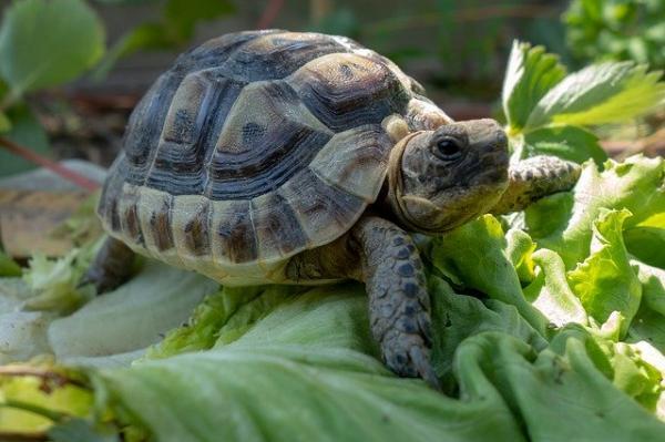 especie de tortugas