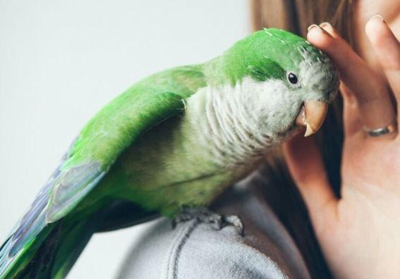 casetas para ave