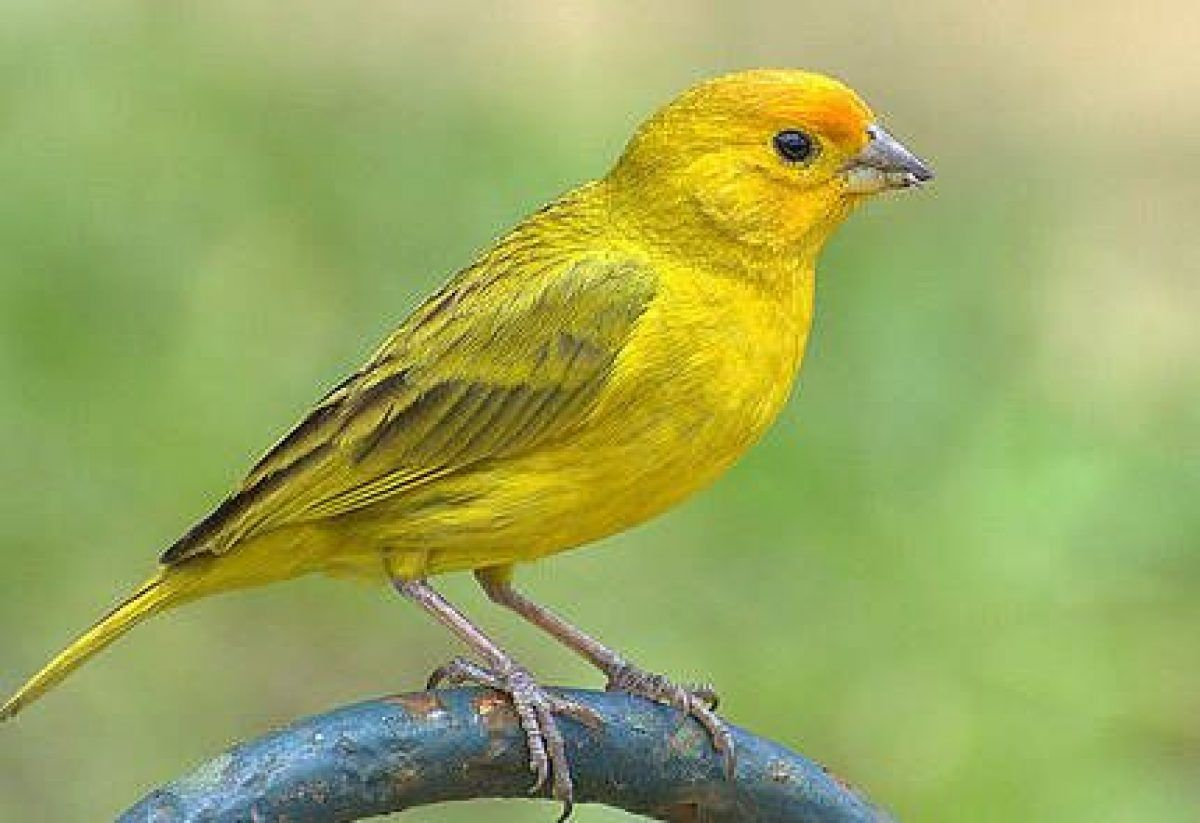 casetas para pajaros canarios