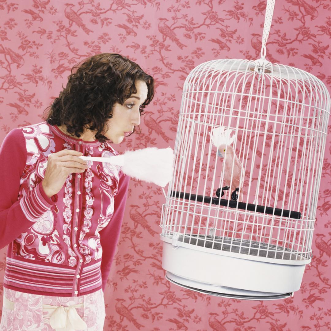 caseta para aves
